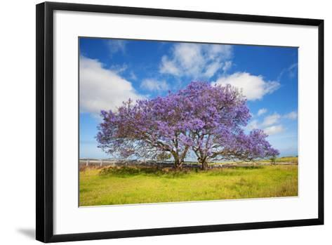 Jacaranda Trees in Bloom in the Up-Country on Maui-Ron Dahlquist-Framed Art Print