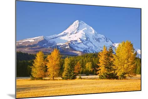 Sunrise over Mt. Hood and Fall Color Trees, Hood River, Oregon Cascades-Craig Tuttle-Mounted Photographic Print