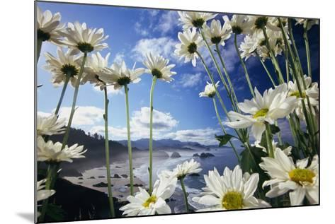 Wildflowers in Bloom Along Coastline-Craig Tuttle-Mounted Photographic Print