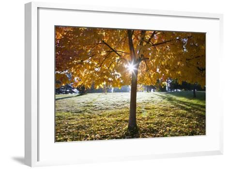 Sunshine Through a Fall Tree-Craig Tuttle-Framed Art Print