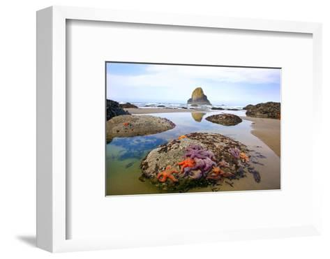 Starfish and Rock Formations Along Indian Beach, Oregon Coast-Craig Tuttle-Framed Art Print