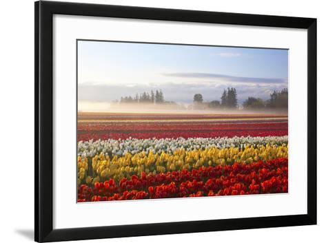 Sunrise over Tulip Field, Wooden Shoe Tulip Farm, Woodburn, Oregon-Craig Tuttle-Framed Art Print