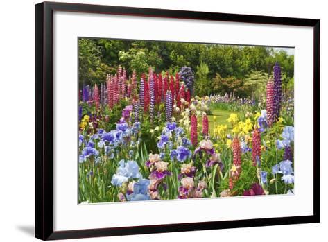 Schreiner Iris Gardens in Salem, Oregon-Craig Tuttle-Framed Art Print
