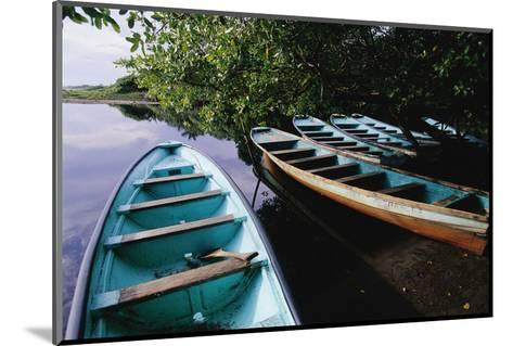 Tour Boats Moored in Ventanilla Lagoon-Danny Lehman-Mounted Photographic Print