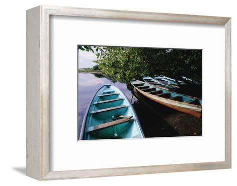Tour Boats Moored in Ventanilla Lagoon-Danny Lehman-Framed Art Print