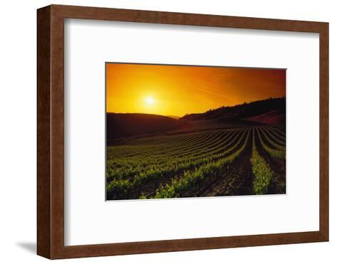 Vineyards at Sunset-Charles O'Rear-Framed Art Print