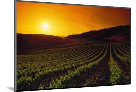 Vineyards at Sunset-Charles O'Rear-Mounted Photographic Print