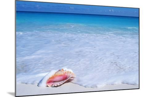 Mexico, Yucatan Peninsula, Carribean Beach at Cancun, Conch Shell on Sand-Chris Cheadle-Mounted Photographic Print