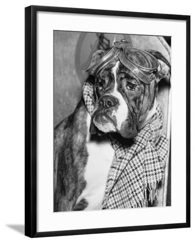 Cute Wrinkled Boxer Dog Dressed-Up in Checked Scarf and Goggles--Framed Art Print