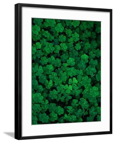 Clovers-Jim Zuckerman-Framed Art Print