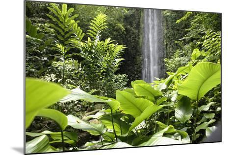 Waterfall in Rain Forest, Jurong Bird Park, Singapore-Angelo Cavalli-Mounted Photographic Print