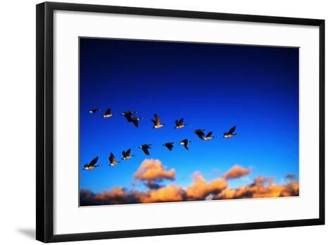 Canada Geese Flying at Sunrise-Chase Swift-Framed Art Print