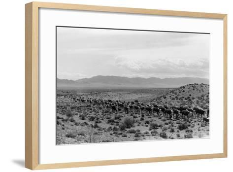 Cattle Drive through Desert-Hutchings, Selar S.-Framed Art Print