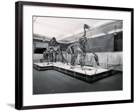 View of Tyrannosaur Skeletons in Museum--Framed Art Print