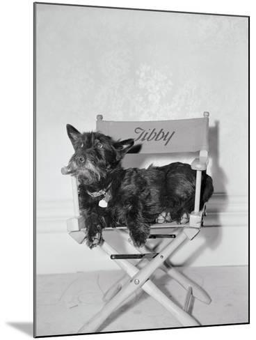 Bette Davis's Dog Tibby--Mounted Photographic Print