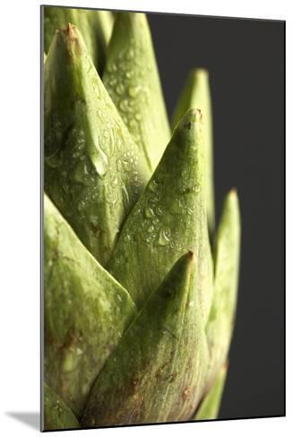 Artichoke Leaves--Mounted Photographic Print