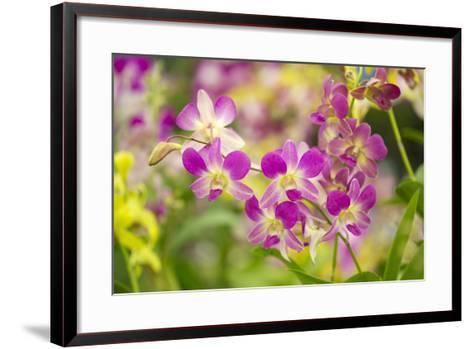 Purple Dendrobium Orchid-Ron Dahlquist-Framed Art Print