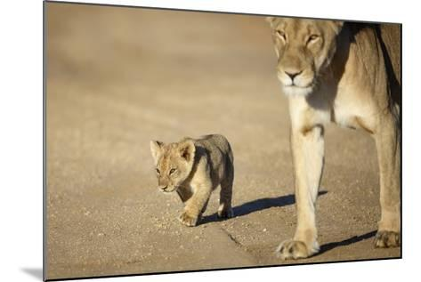 Lioness and Cub, Botswana-Richard Du Toit-Mounted Photographic Print
