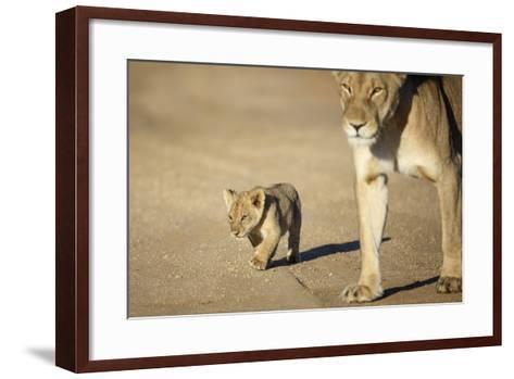 Lioness and Cub, Botswana-Richard Du Toit-Framed Art Print
