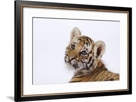 Tiger Cub-Martin Harvey-Framed Art Print