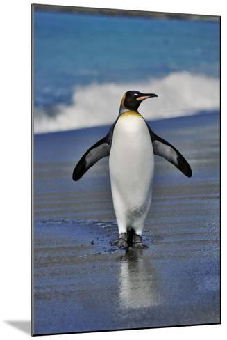 King Penguin on the Beach-Martin Harvey-Mounted Photographic Print