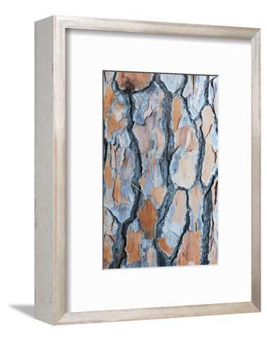 Pine Tree Bark-Frank Lukasseck-Framed Art Print