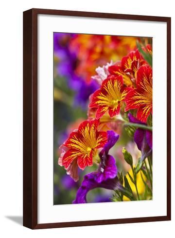 Salpiglossis Flowers in Full Bloom-Terry Eggers-Framed Art Print