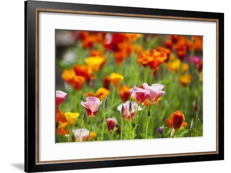 Poppies in Full Bloom-Terry Eggers-Framed Art Print