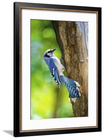 Blue Jay-Gary Carter-Framed Art Print
