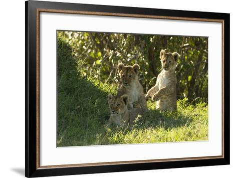 Africa Lion Cubs Playing-Mary Ann McDonald-Framed Art Print