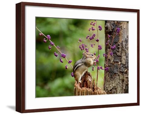 Eastern Chipmunk-Gary Carter-Framed Art Print