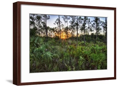 Sunrise in Mahogany Hammock-Terry Eggers-Framed Art Print