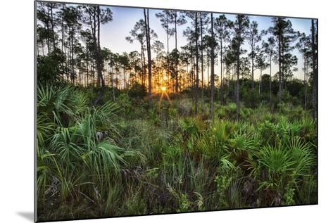 Sunrise in Mahogany Hammock-Terry Eggers-Mounted Photographic Print