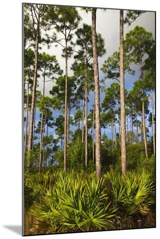 Pine Forest in Long Pine Area of Everglades NP-Terry Eggers-Mounted Photographic Print