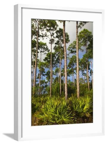 Pine Forest in Long Pine Area of Everglades NP-Terry Eggers-Framed Art Print