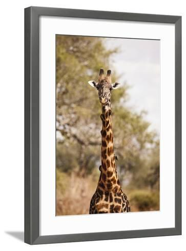 Endemic Thornicroft Giraffe-Michele Westmorland-Framed Art Print