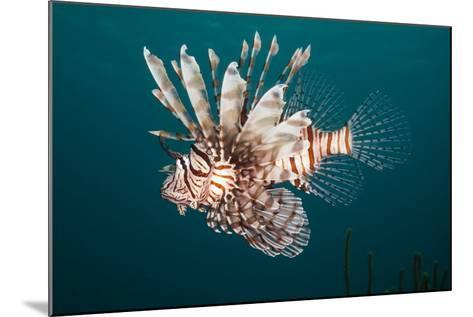Lionfish-Michele Westmorland-Mounted Photographic Print