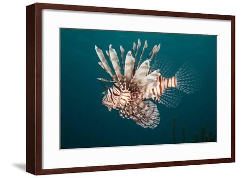 Lionfish-Michele Westmorland-Framed Art Print