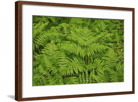 Ferns-Frank Krahmer-Framed Art Print