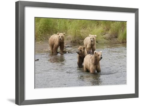 Brown(Grizzly) Bear Mother and Two Year Old Cubs-Hal Beral-Framed Art Print