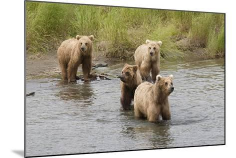 Brown(Grizzly) Bear Mother and Two Year Old Cubs-Hal Beral-Mounted Photographic Print