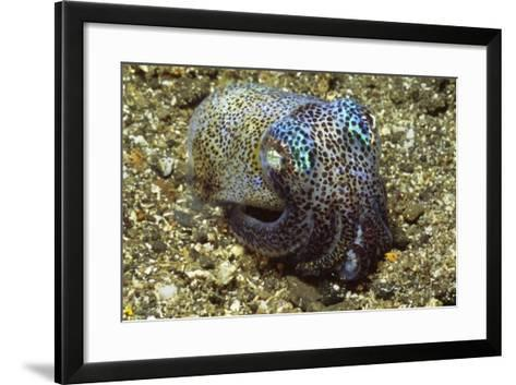 Berry's Bobtail Squid-Hal Beral-Framed Art Print