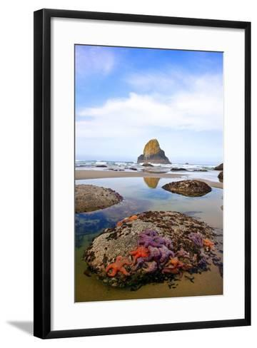 Starfish and Rock Formations along Indian Beach, Oregon Coast-Craig Tuttle-Framed Art Print