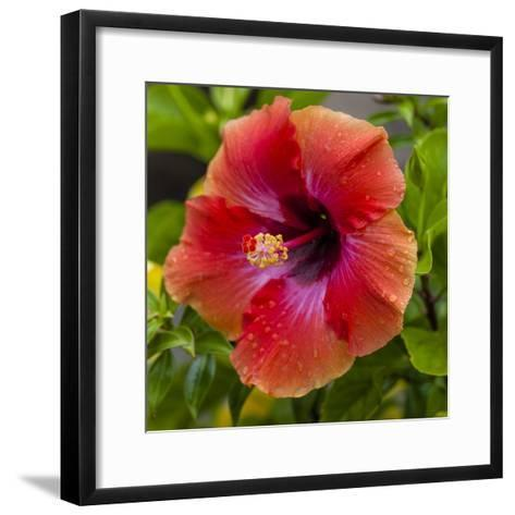 Close-Up of Hibiscus Flower-Richard T. Nowitz-Framed Art Print