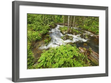 Forest Brook in Beech Forest with Deadwood-Frank Krahmer-Framed Art Print