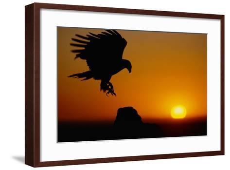 Golden Eagle at Sunset-W^ Perry Conway-Framed Art Print