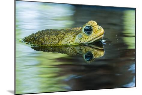 Cane Toad-Gary Carter-Mounted Photographic Print