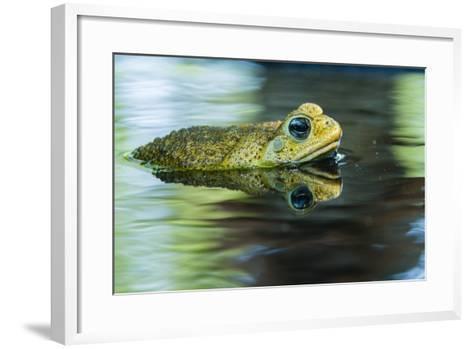 Cane Toad-Gary Carter-Framed Art Print