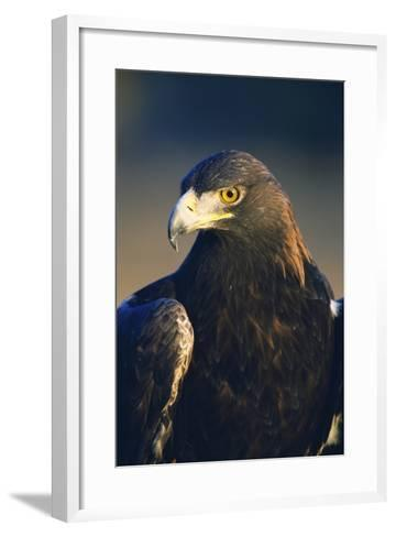 Golden Eagle-W^ Perry Conway-Framed Art Print