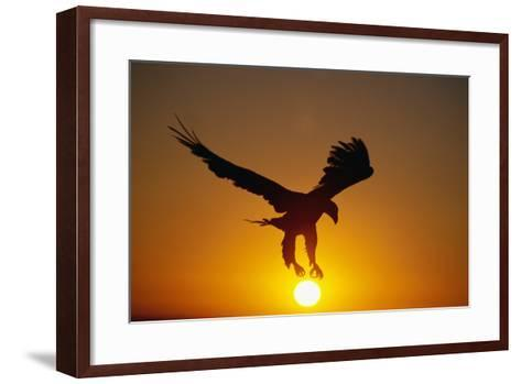 Bald Eagle Flying at Sunrise-W^ Perry Conway-Framed Art Print